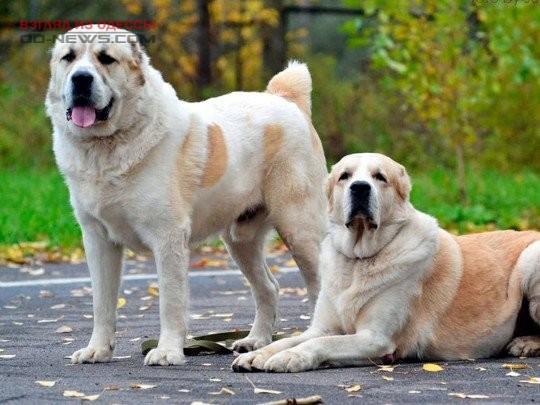 Маленькому одесситу, пострадавшему от собак, наложили свыше 20 швов